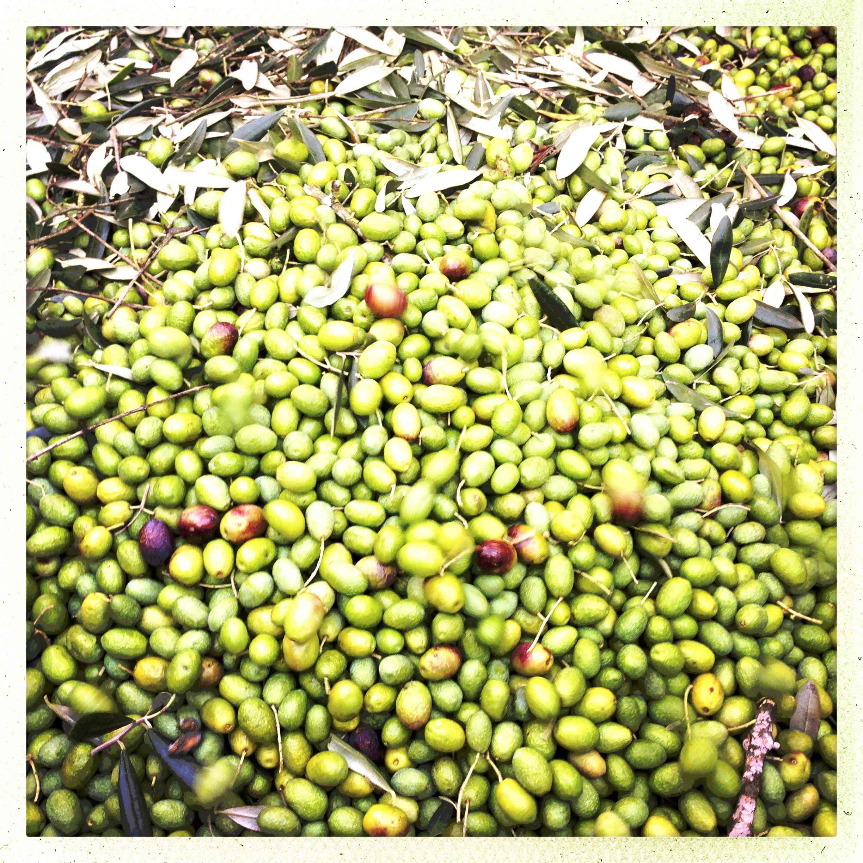 Oliven und bl%c3%a4tter