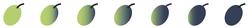 Reifegrade der Oliven und Polyphenolgehalte