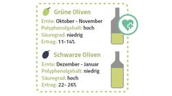 grüne, schwarze Oliven und der Ertrag