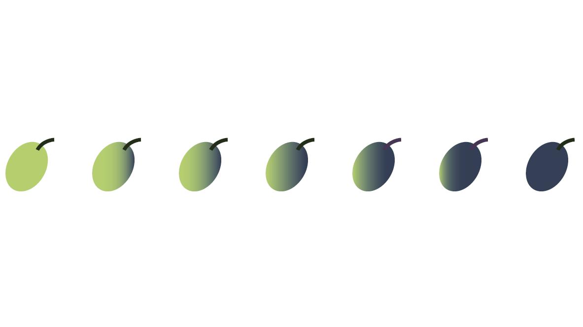 Reifegrade der oliven3