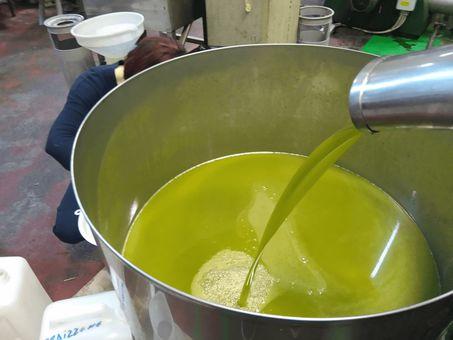 Frisches Olivenöl in der Mühle von Oleificio Costa