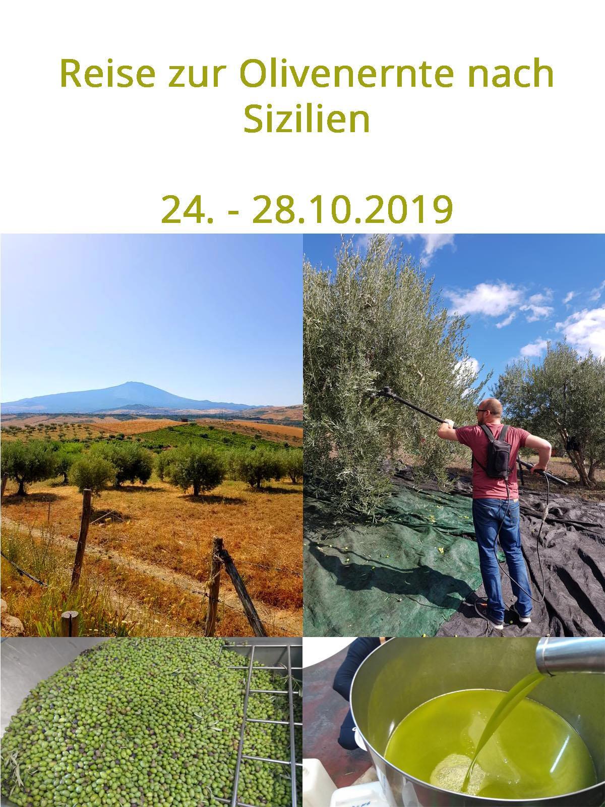 Olivenernte 2019