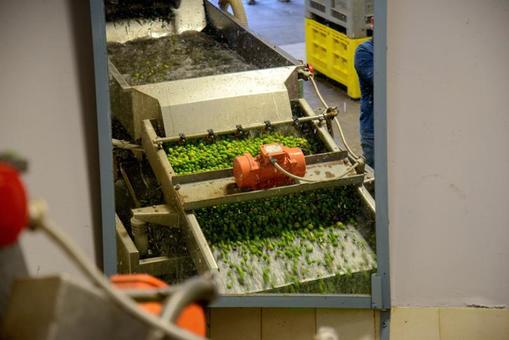 Waschmaschine für Oliven