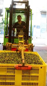 Gabelstapler Olivenkiste