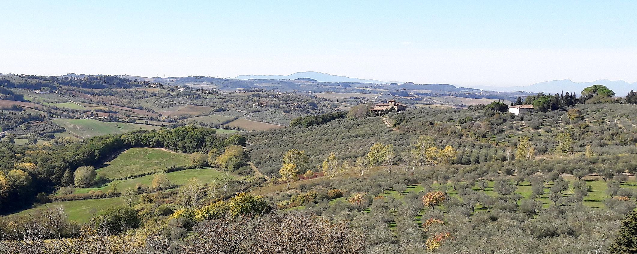 Olivenhain toskana talente olivenoel